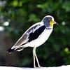 DSC_0068 Bird