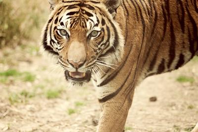 Zoo 096 copy