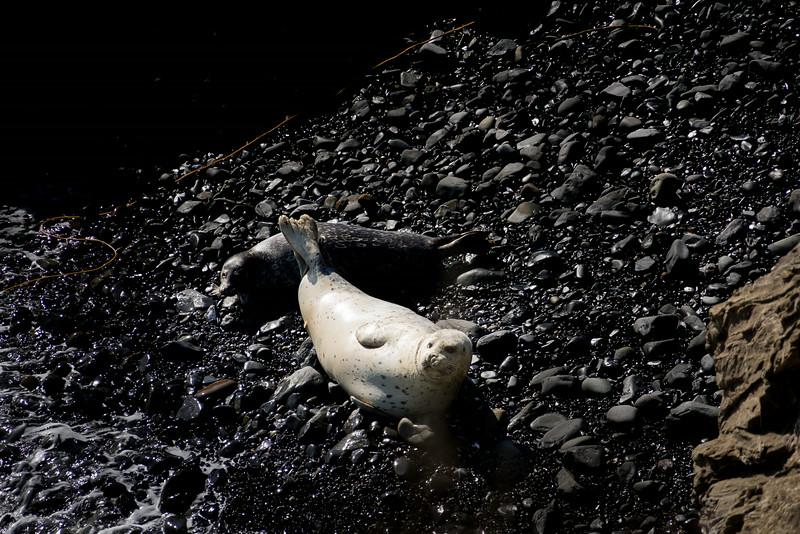Seals at rest