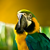 Posing Parrot