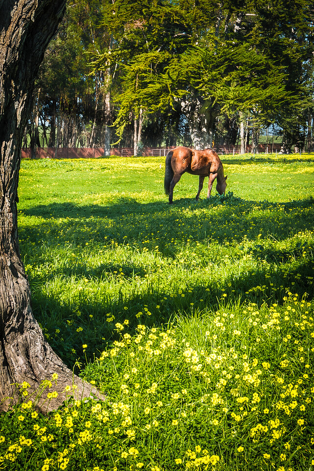 Pastoral Scene with Grazing Horse