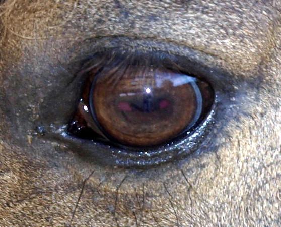 Through the Eye of a Horse