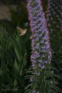 Moth Feeding I
