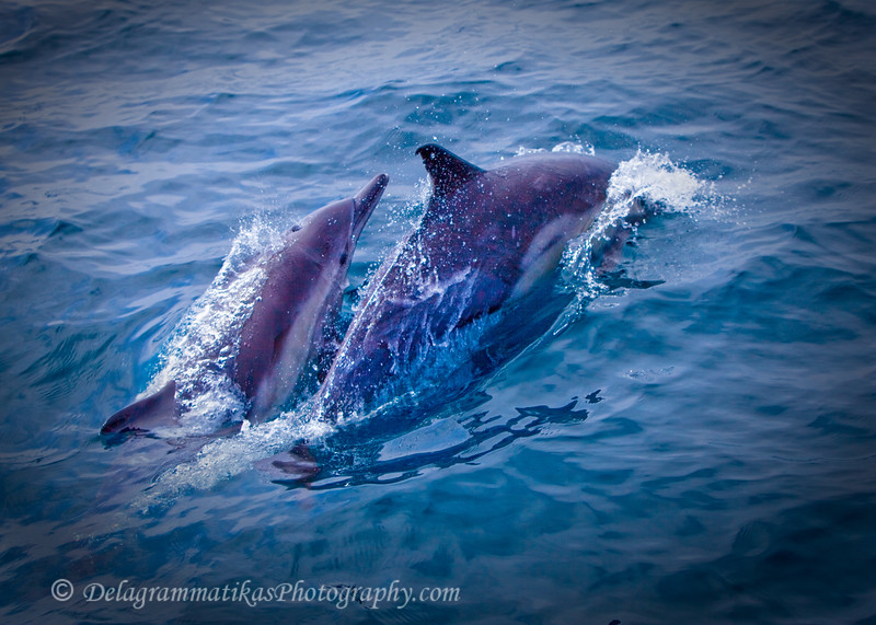 20110924_Whales & Dolphins_2426