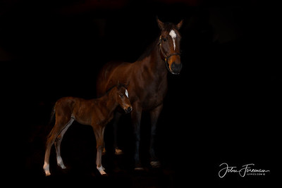 Thoroughbred Mare & Foal, Newmarket