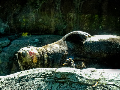 Philadelphia Zoo - Philadelphia, Pennsylvania