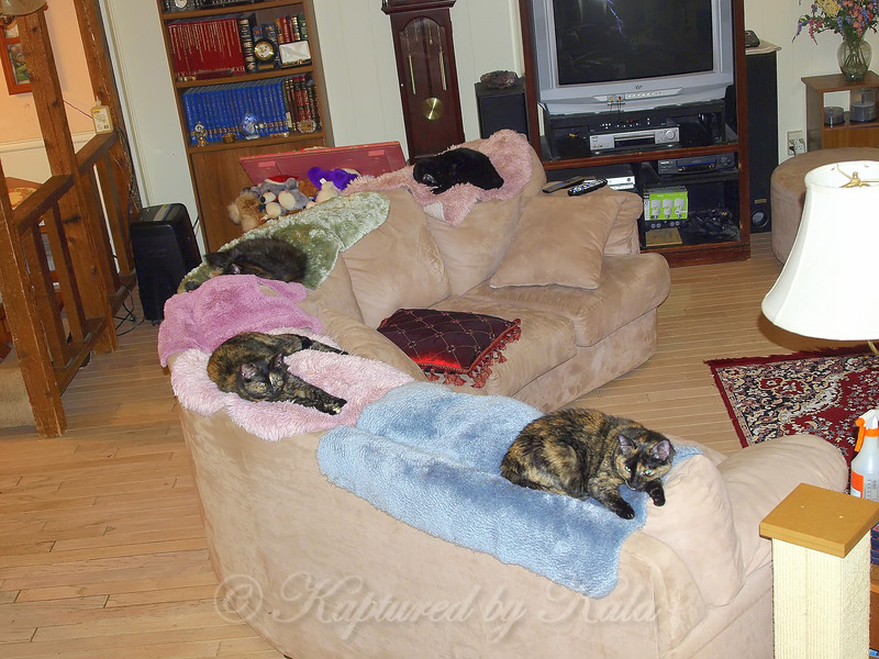 My 4 Cats