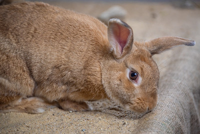 Rabbit - From Photo Ops Room