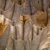 Sandhill Crane (Grus canadensis) Feathers