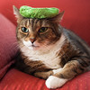 """From the """"Stuff on my Cat"""" files…"""