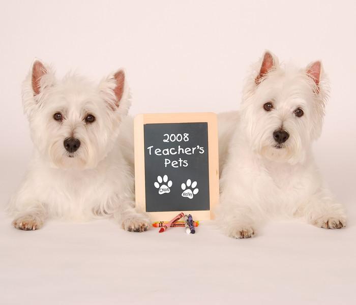 """""""Teacher's Pets"""""""