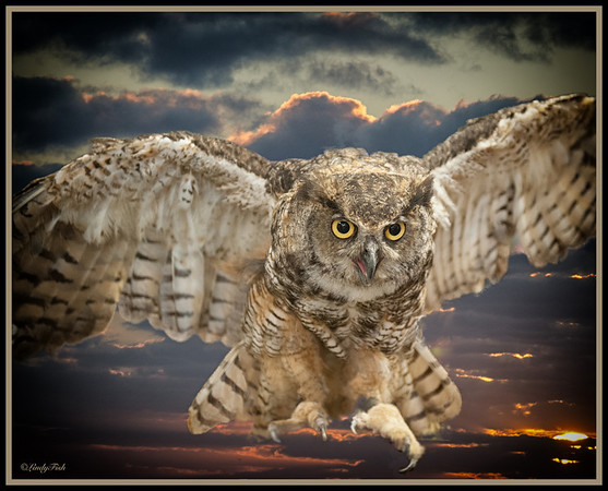 ANIMALS-OWLS
