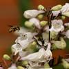 Bee_3434r
