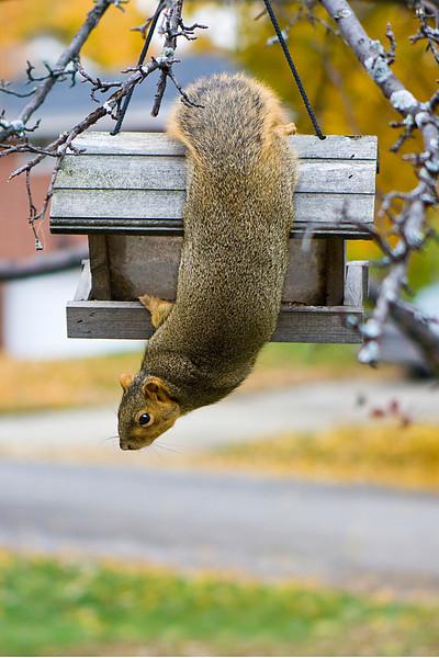 200910_Squirrel_6501