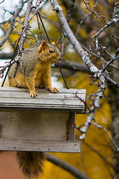 200910_Squirrel_6492