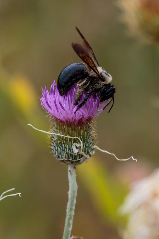 IMAGE: https://photos.smugmug.com/Animals/Austin-Area-Wildlife-Excursion/i-8XbQsTV/0/b3bffac7/XL/IMD_1435-XL.jpg