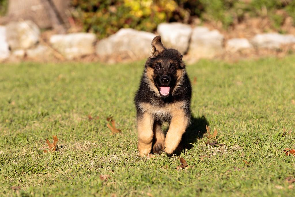 IMAGE: https://photos.smugmug.com/Animals/Greta/i-QGjzrvc/0/XL/IMD_5739-XL.jpg