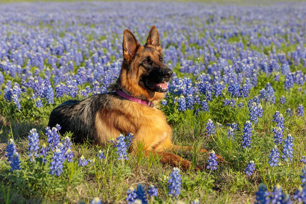 IMAGE: https://photos.smugmug.com/Animals/Greta/i-X4WVVdr/0/e2e1b24d/X2/IM5_1837-X2.jpg