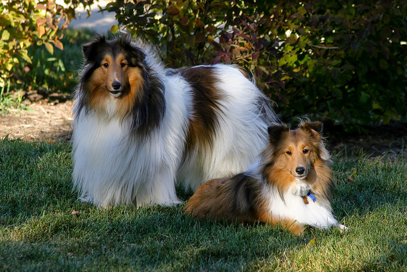 Puppies-040928-001