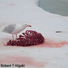 seal remains