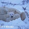 polar bear-14