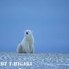 polar bear-40