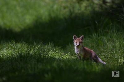Cub, Suffolk