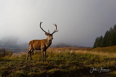 Red Deer, Highlands