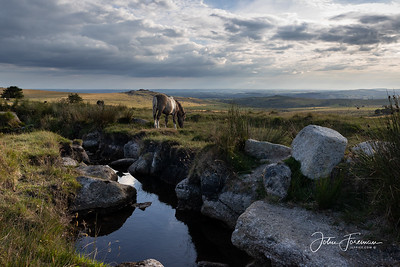 Pork Hill, Dartmoor
