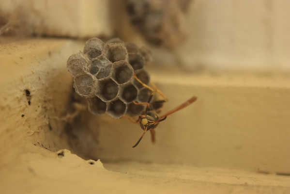 Wasp 2