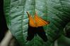ButterflyCostaRica03