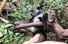 Sykes Blue Monkeys at Lake Manyara