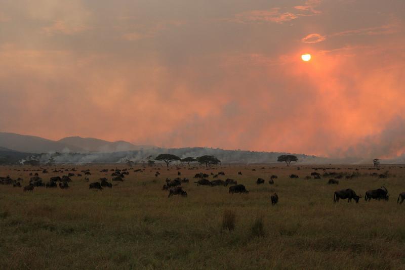 Wildebeast Western Serengeti Migration Tanzania.  Grass burning.