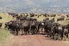 Wildebeast Western Serengeti Migration