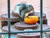 Squirrel & pumpkin - 1 - 640 p
