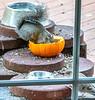 Squirrel & pumpkin - 2 - 640 p