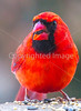 Backyard bird --0135 - 72 ppi-2