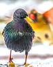 Backyard bird - 100-400 - A #2-0028 - 72 ppi