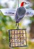 Birds at feeder & suet box - 11-13-2018-1 - 72 ppi