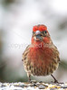 Backyard bird --0088 - 72 ppi