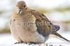 Backyard bird --0097 - 72 ppi