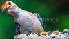 Backyard animals - May 2014-0037 - 72 ppi