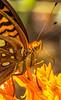 ACA - TransAm - Missouri -  - C1-0550 - Wildlife along Hwy 106 near Eminence - 72 ppi-2