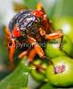 Cicada - May 2011-2 - 72 ppi
