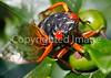 Cicada - May 2011-3 - 72 ppi