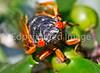 Cicada - May 2011-4 - 72 ppi