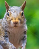 Backyard animals - May 2014-0020 - 72 ppi
