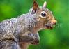 Backyard animals - May 2014-0012 - 72 ppi