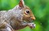Backyard animals - May 2014-0062 - 72 ppi