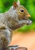 Backyard animals - May 2014-0018 - 72 ppi